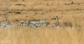 stone wall (1 of 1)