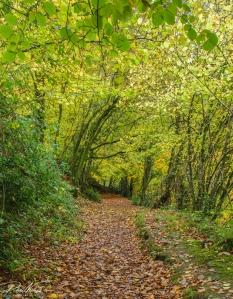 Lane of Trees-3214