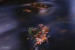 winter leaves-3294