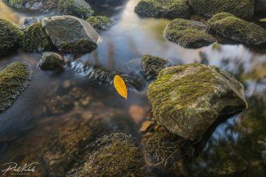 erme bridge leaf