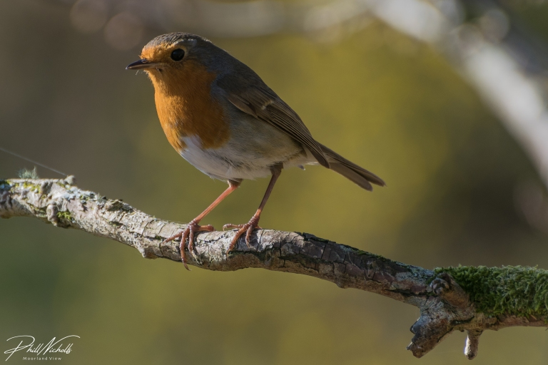 Robin Branch