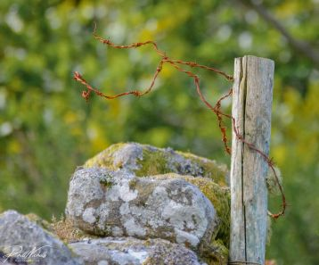 Wire& post