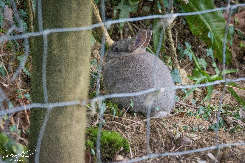 Baby Bunny 1 (1 of 1)